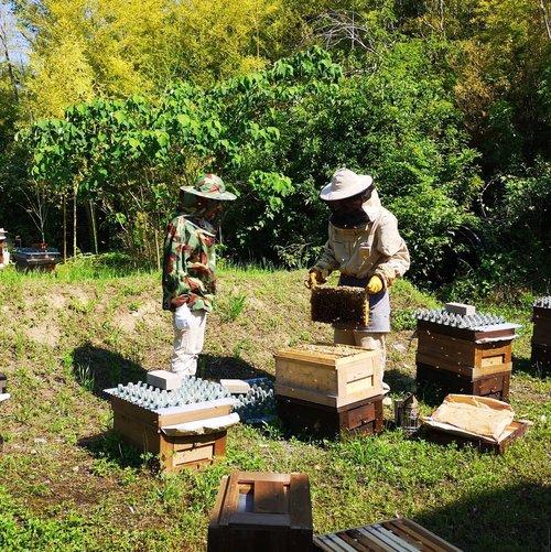 蜂蜜は虫歯になるのか?の答えを求めて養蜂場へ・・・